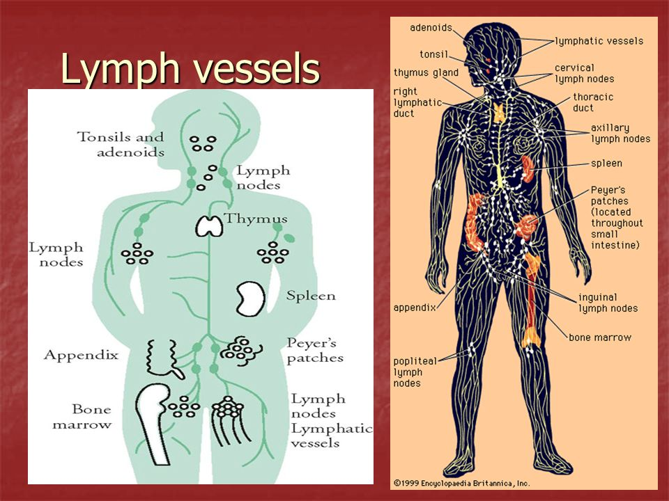 Autoimmune Disorders – a.Your system attacks your own self cells a.