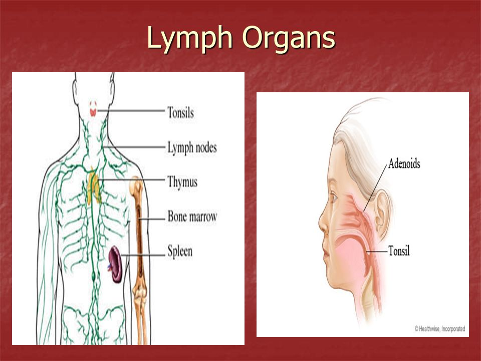 Structure Details lymph – clear and colorless; composed of water, lymphocytes, nutrients, hormones, and salts; also known as intercellular or interstitial fluid.