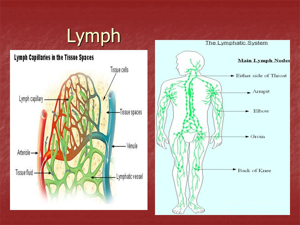 Structure Details lymph nodes – small round structures located in lymph vessels; they are located in clusters in the following areas: cervical (neck), axillary (armpits), pectoral (chest), abdominal (stomach), inguinal (groin area), popliteal (back of leg, behind knees) lymph nodes – small round structures located in lymph vessels; they are located in clusters in the following areas: cervical (neck), axillary (armpits), pectoral (chest), abdominal (stomach), inguinal (groin area), popliteal (back of leg, behind knees) Function: they fight disease by producing antibodies, removing bacteria or malignant cells, and filtering foreign substances; contains large amounts of lymphocytes and macrophages Function: they fight disease by producing antibodies, removing bacteria or malignant cells, and filtering foreign substances; contains large amounts of lymphocytes and macrophages