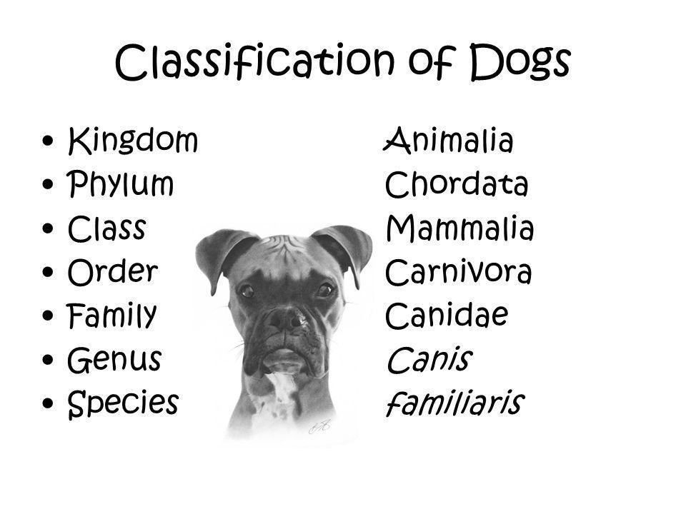 Classification of Dogs KingdomAnimalia PhylumChordata ClassMammalia OrderCarnivora FamilyCanidae GenusCanis Speciesfamiliaris