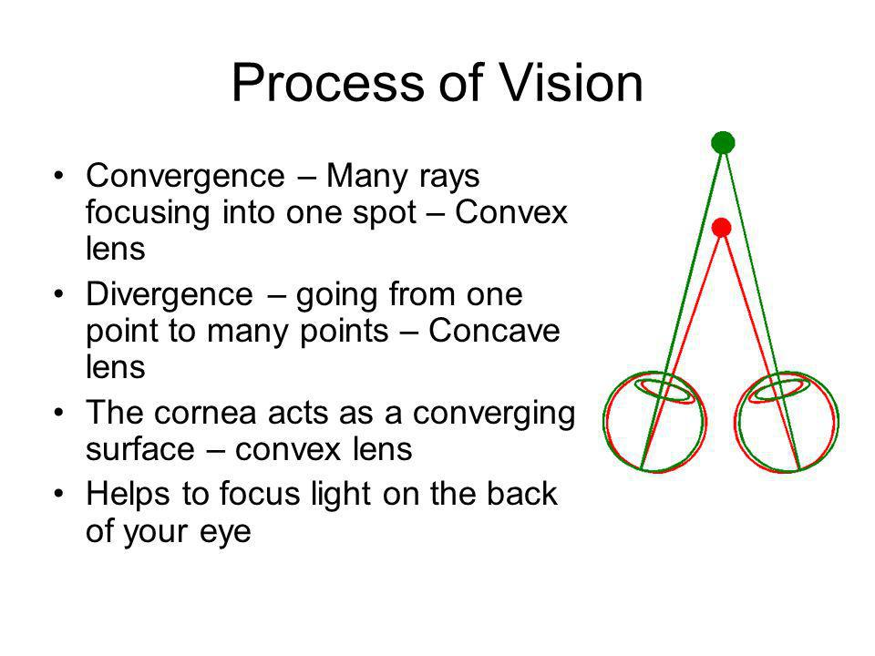 Process of Vision Convergence – Many rays focusing into one spot – Convex lens Divergence – going from one point to many points – Concave lens The cor
