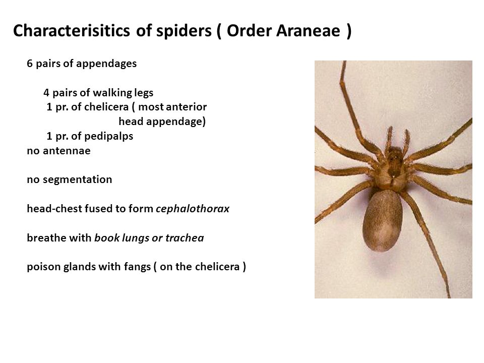 4 Orders - Spiders Araneae Scorpions Scorpionida Daddy Long legs Opiliones Ticks and Mites Arcarina