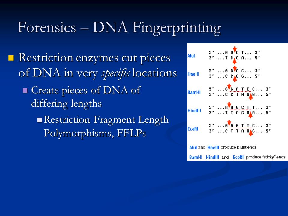 Forensics – DNA Fingerprinting Restriction enzymes cut pieces of DNA in very specific locations Restriction enzymes cut pieces of DNA in very specific locations Create pieces of DNA of differing lengths Create pieces of DNA of differing lengths Restriction Fragment Length Polymorphisms, FFLPs Restriction Fragment Length Polymorphisms, FFLPs