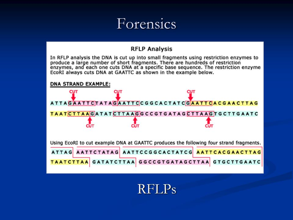 Forensics RFLPs