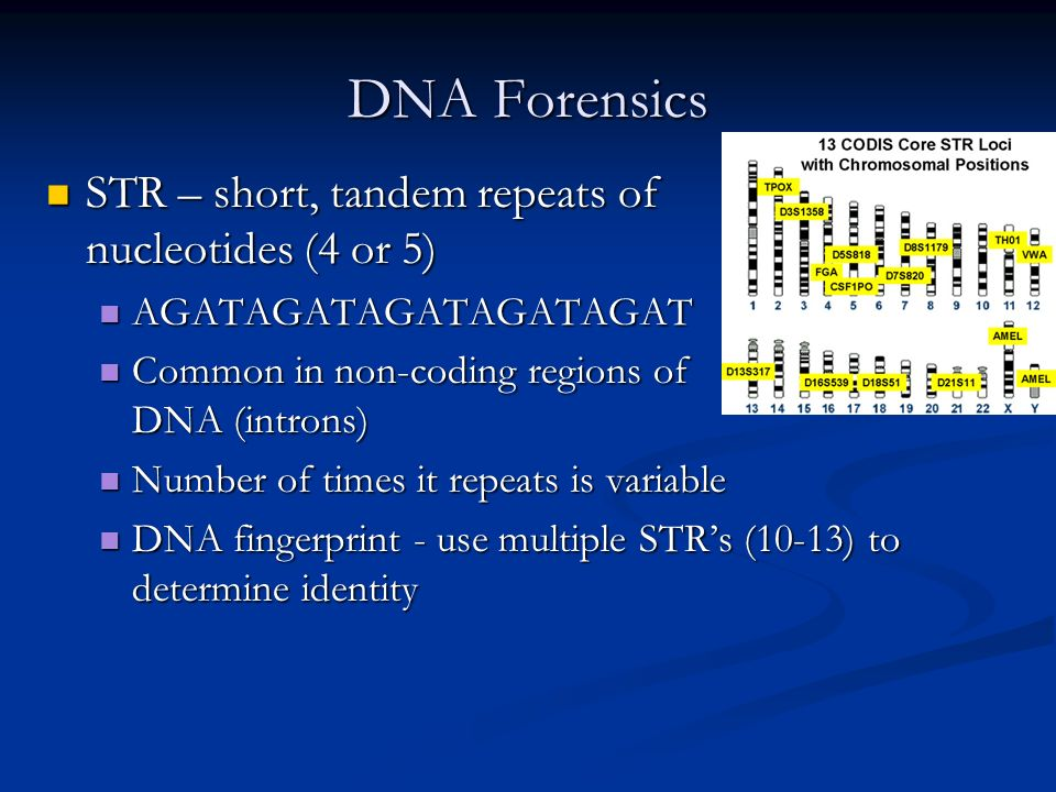DNA Forensics STR – short, tandem repeats of nucleotides (4 or 5) STR – short, tandem repeats of nucleotides (4 or 5) AGATAGATAGATAGATAGAT AGATAGATAGATAGATAGAT Common in non-coding regions of DNA (introns) Common in non-coding regions of DNA (introns) Number of times it repeats is variable Number of times it repeats is variable DNA fingerprint - use multiple STRs (10-13) to determine identity DNA fingerprint - use multiple STRs (10-13) to determine identity