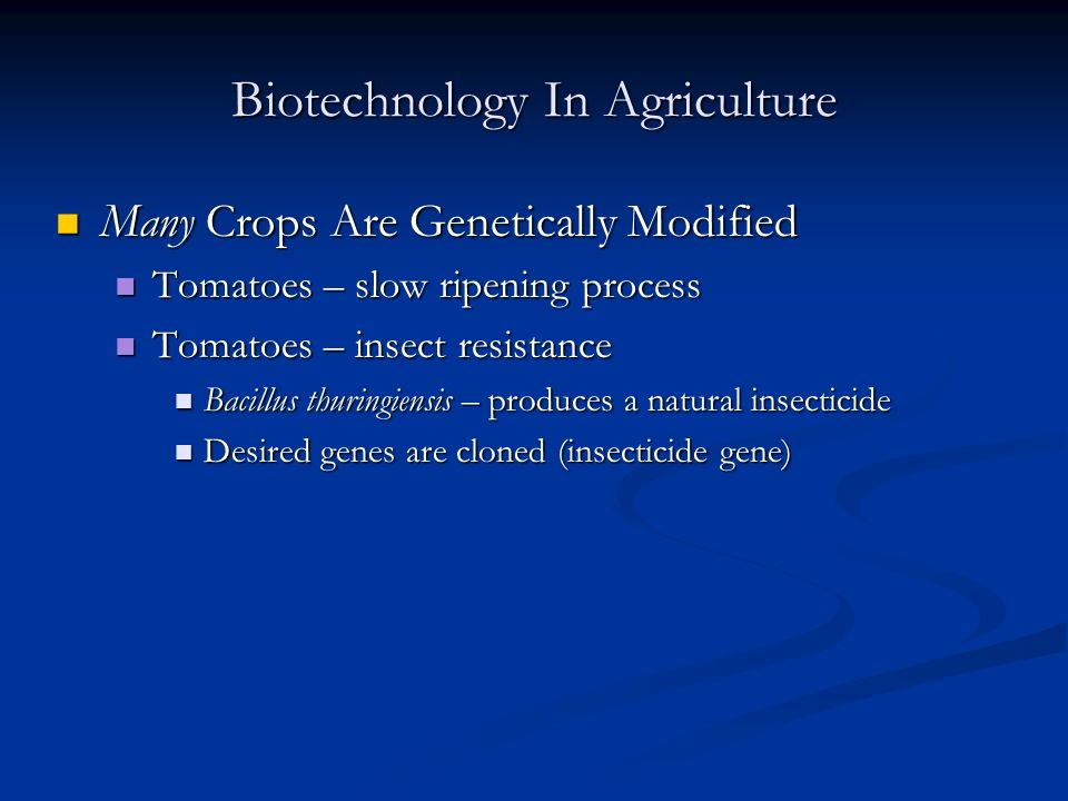Biotechnology In Agriculture Many Crops Are Genetically Modified Many Crops Are Genetically Modified Tomatoes – slow ripening process Tomatoes – slow ripening process Tomatoes – insect resistance Tomatoes – insect resistance Bacillus thuringiensis – produces a natural insecticide Bacillus thuringiensis – produces a natural insecticide Desired genes are cloned (insecticide gene) Desired genes are cloned (insecticide gene)