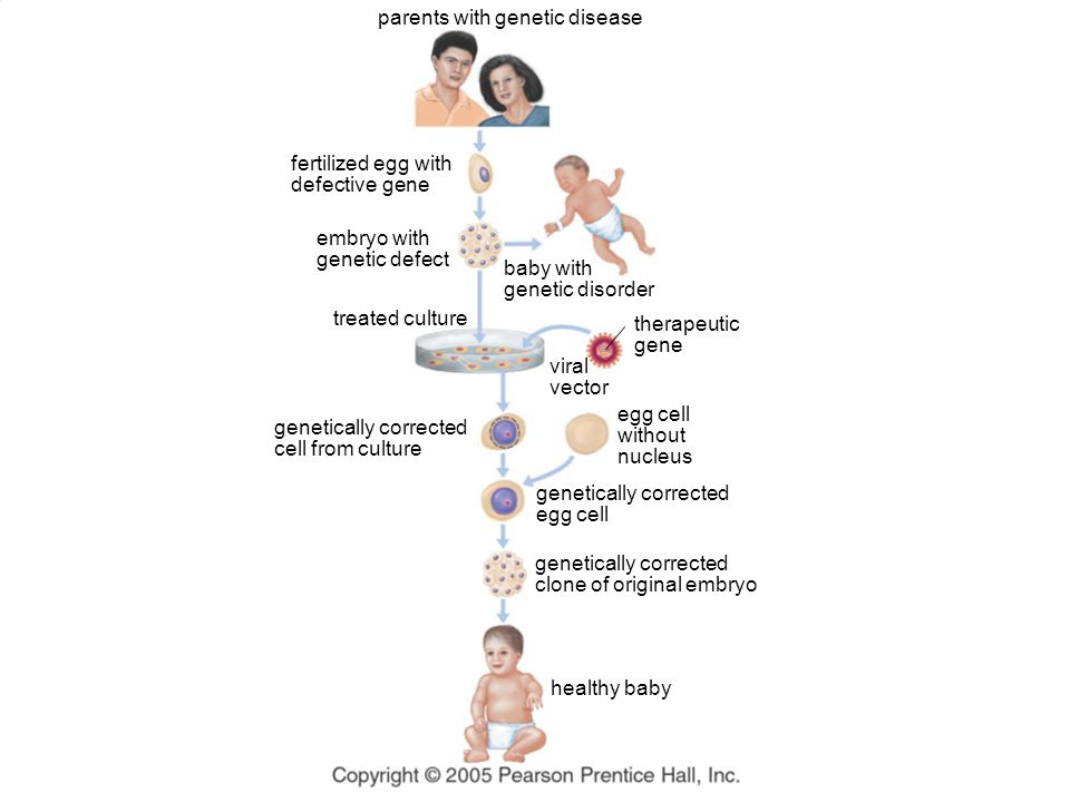 parents with genetic disease fertilized egg with defective gene embryo with genetic defect therapeutic gene genetically corrected cell from culture eg