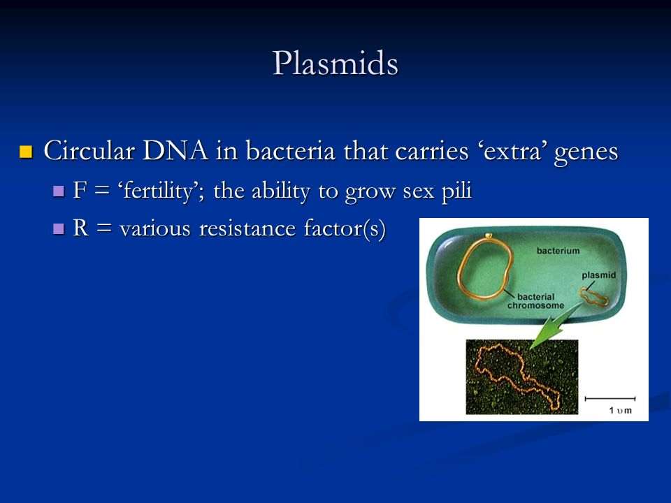 Plasmids Circular DNA in bacteria that carries extra genes Circular DNA in bacteria that carries extra genes F = fertility; the ability to grow sex pili F = fertility; the ability to grow sex pili R = various resistance factor(s) R = various resistance factor(s)