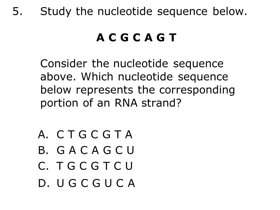 5.Study the nucleotide sequence below. A C G C A G T Consider the nucleotide sequence above.