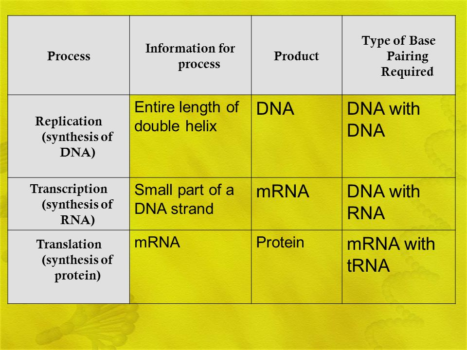 Process Information for process Product Type of Base Pairing Required Replication (synthesis of DNA) Entire length of double helix DNADNA with DNA Tra