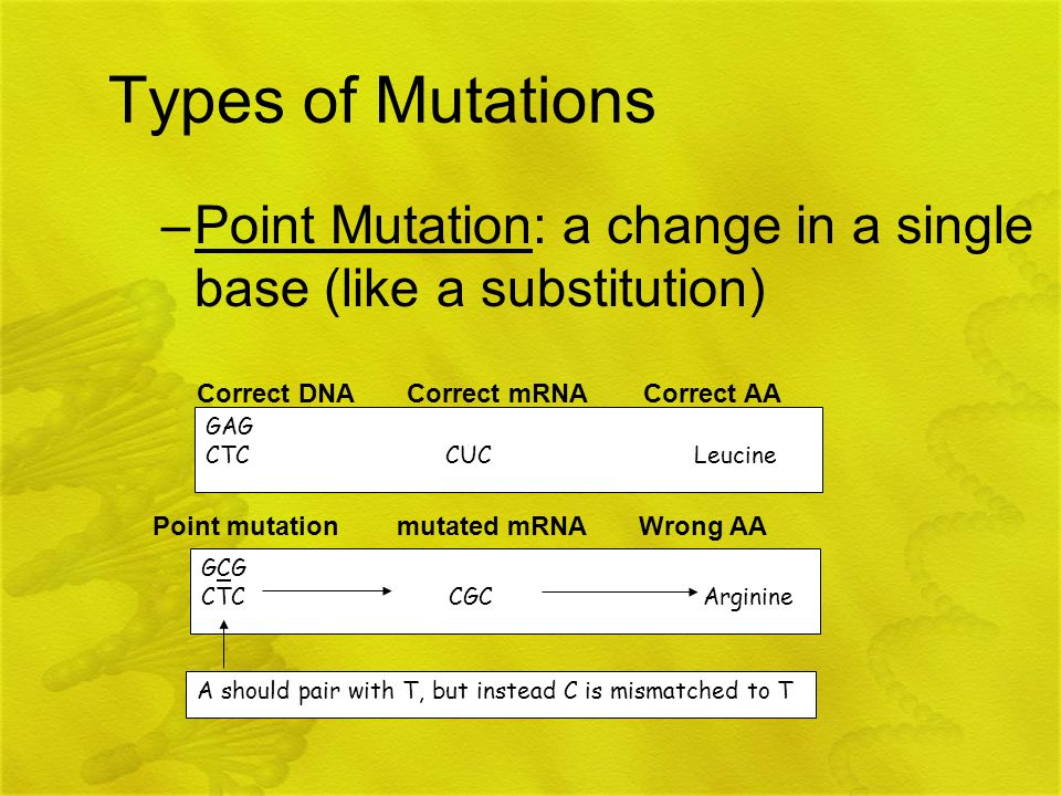 Types of Mutations –Point Mutation: a change in a single base (like a substitution) GAG CTC CUC Leucine Correct DNA Correct mRNA Correct AA GCG CTC CG