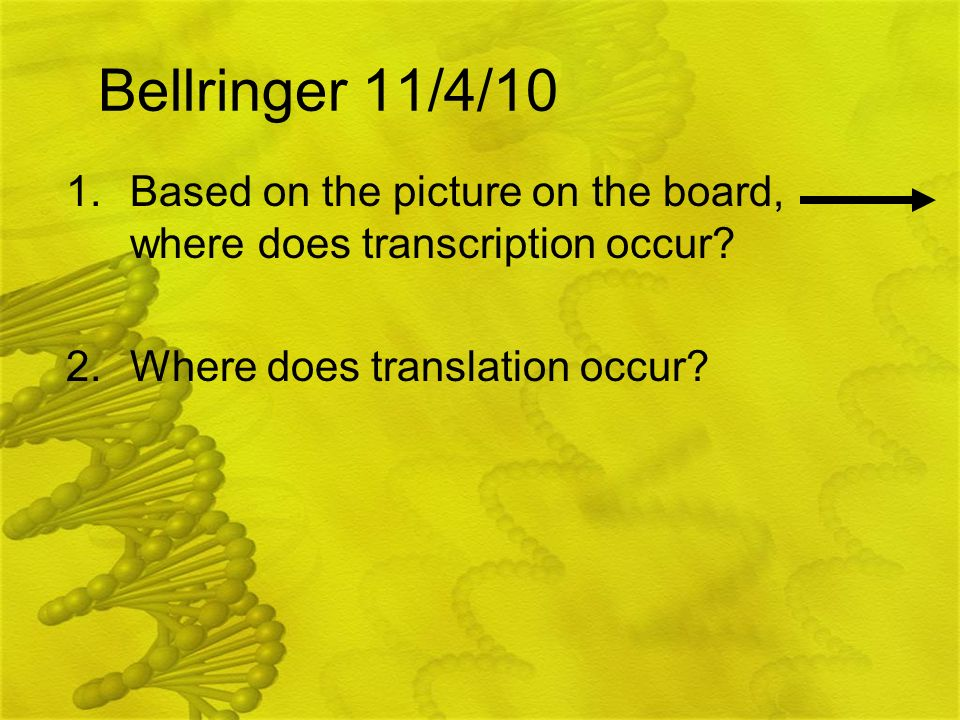 Bellringer 11/4/10 1.Based on the picture on the board, where does transcription occur? 2.Where does translation occur?