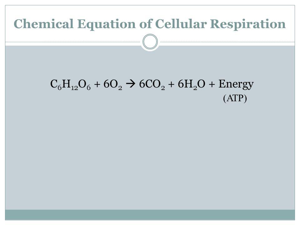 Chemical Equation of Cellular Respiration C 6 H 12 O 6 + 6O 2 6CO 2 + 6H 2 O + Energy (ATP)