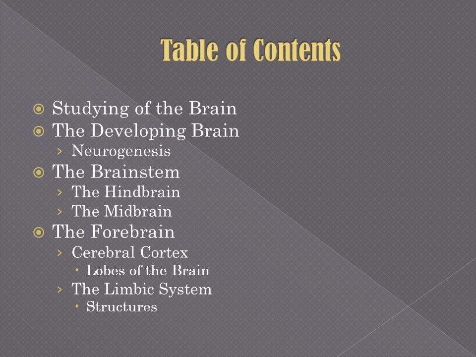 Studying of the Brain The Developing Brain Neurogenesis The Brainstem The Hindbrain The Midbrain The Forebrain Cerebral Cortex Lobes of the Brain The
