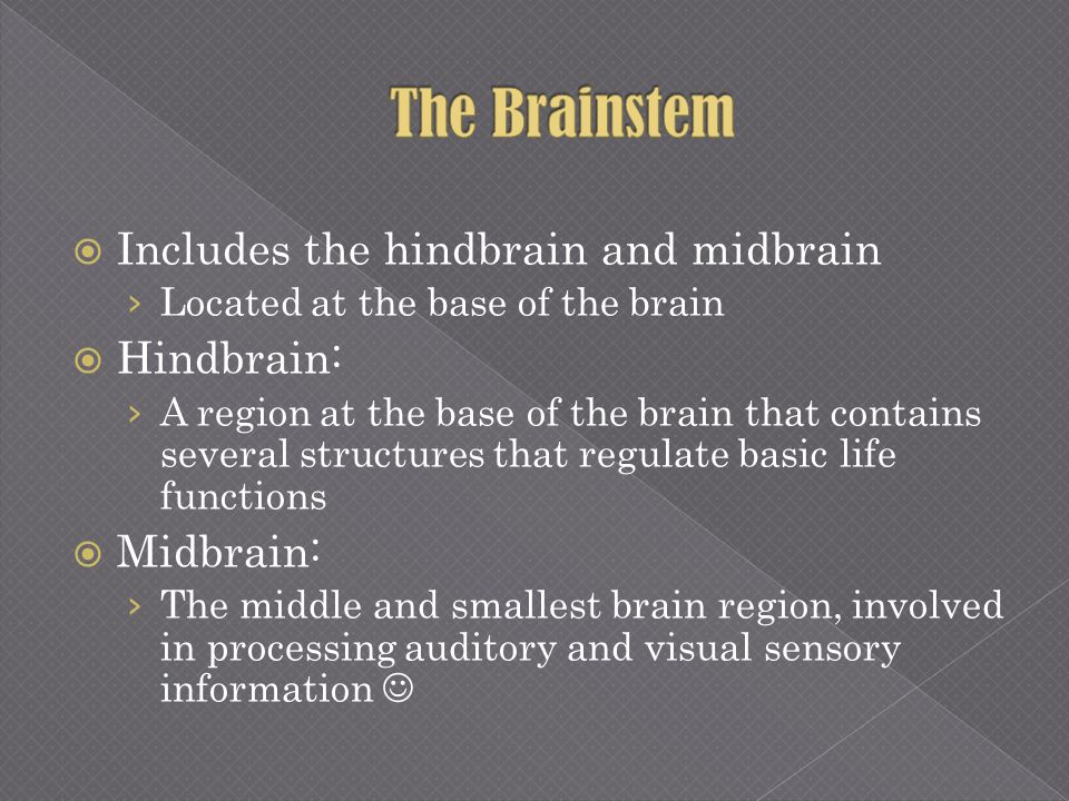 Includes the hindbrain and midbrain Located at the base of the brain Hindbrain: A region at the base of the brain that contains several structures tha