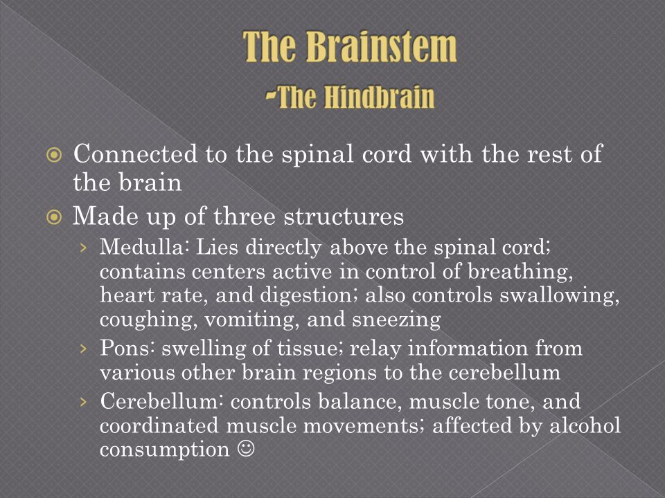 Connected to the spinal cord with the rest of the brain Made up of three structures Medulla: Lies directly above the spinal cord; contains centers act