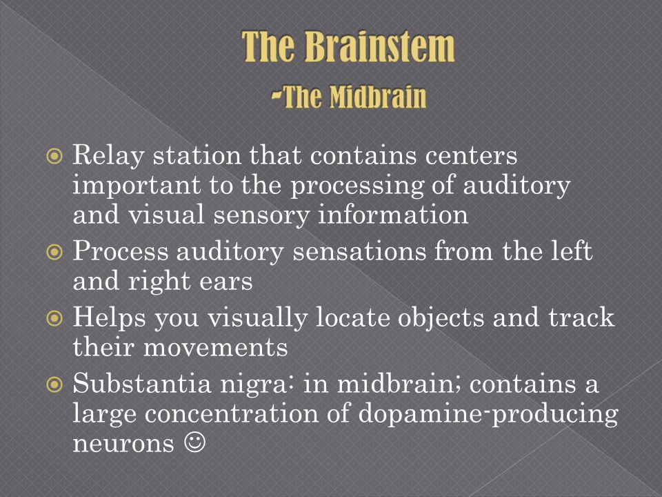 Relay station that contains centers important to the processing of auditory and visual sensory information Process auditory sensations from the left a