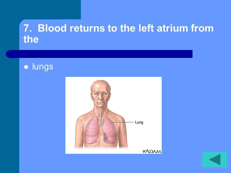 6. Blood leaves the heart and travels to the lungs through the Pulmonary arteries