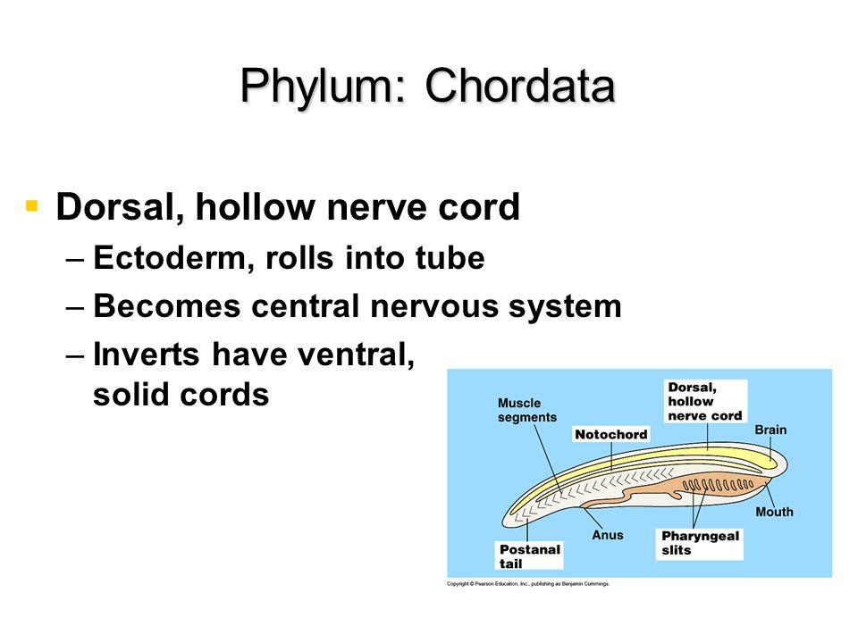 Order: Crocodalia Order: Crocodalia Ectotherms Ectotherms 4-chambered heart 4-chambered heart Parental care Parental care