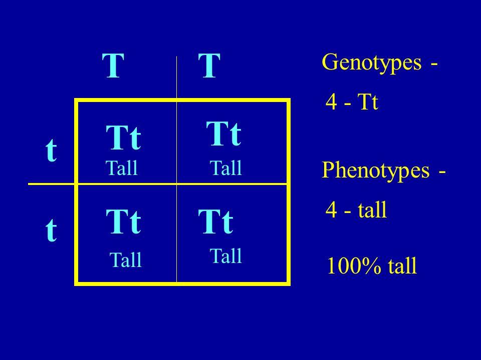 TT Tt t t Genotypes - 4 - Tt Phenotypes - 4 - tall 100% tall Tall