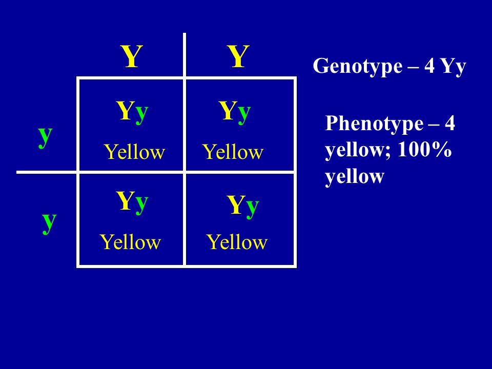 YY y y YyYyYyYy YyYy YyYy Yellow Genotype – 4 Yy Phenotype – 4 yellow; 100% yellow