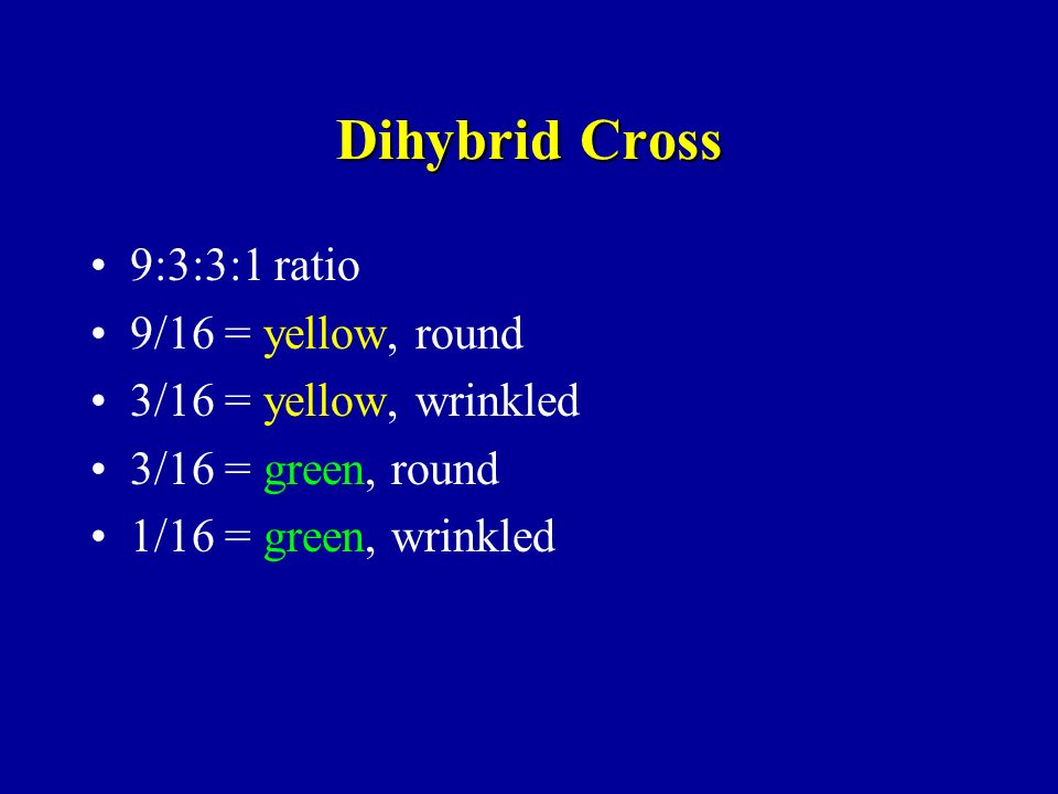 Dihybrid Cross 9:3:3:1 ratio 9/16 = yellow, round 3/16 = yellow, wrinkled 3/16 = green, round 1/16 = green, wrinkled