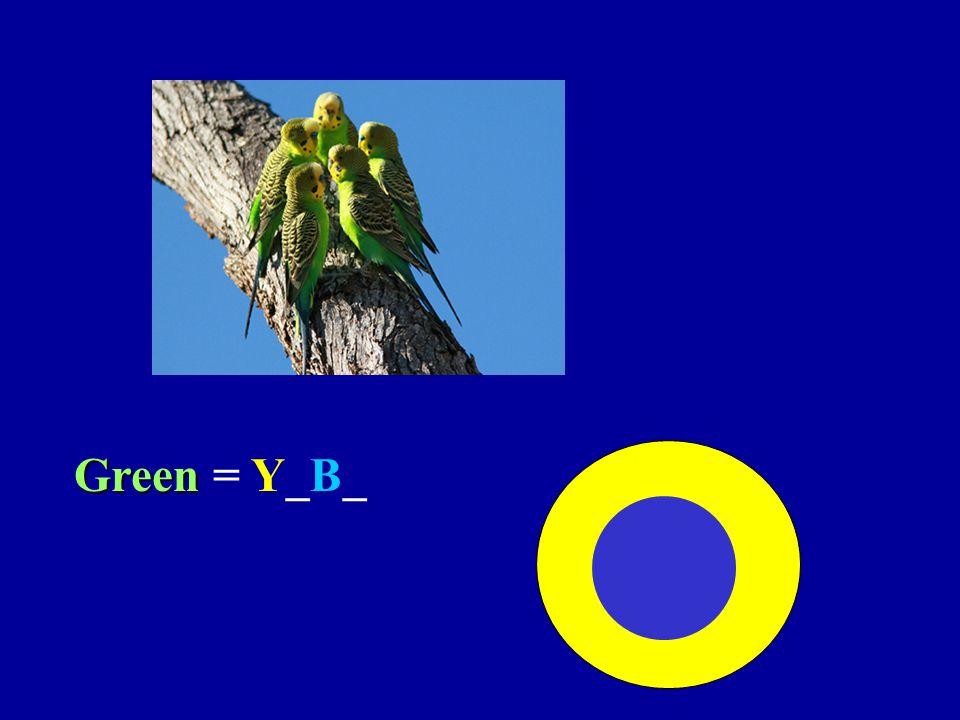 Green Green = Y_B_