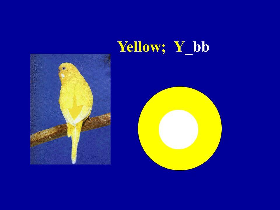 Yellow; Y_bb