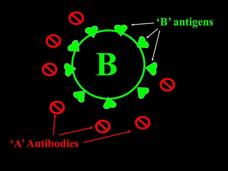 B antigens B A Antibodies