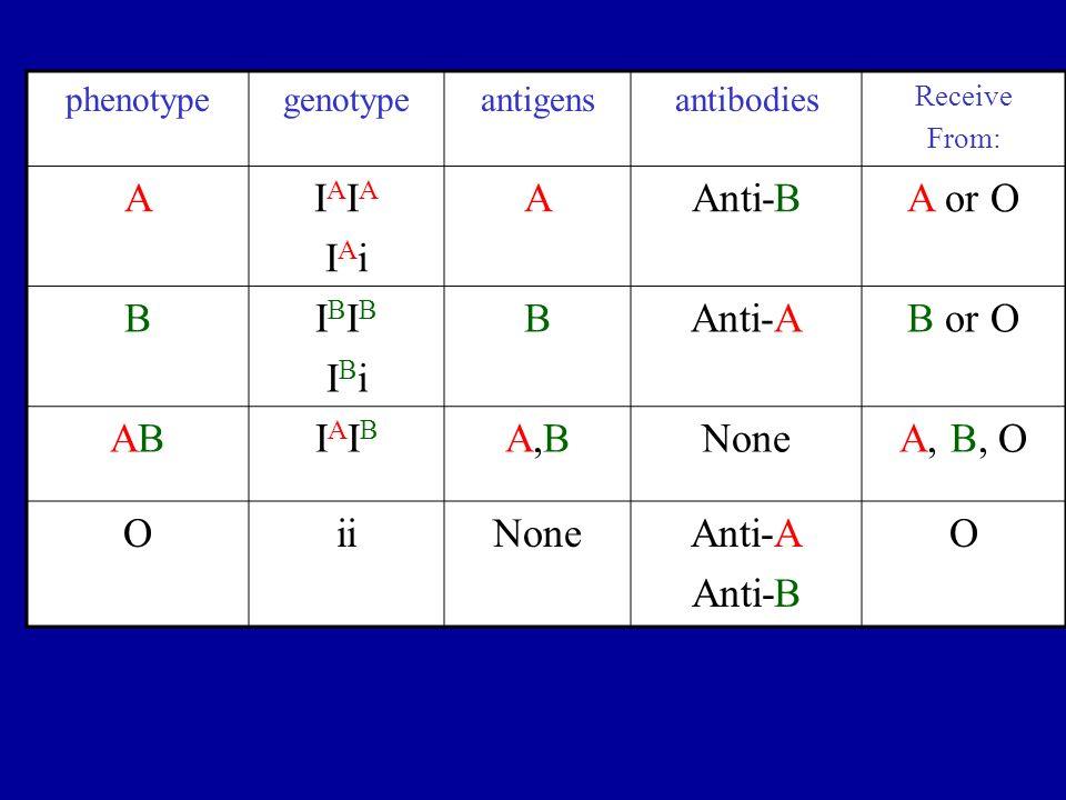 phenotypegenotypeantigensantibodies Receive From: AIAIAIAiIAIAIAi AAnti-BA or O BIBIBIBiIBIBIBi BAnti-AB or O ABABIAIBIAIB A,BA,BNoneA, B, O OiiNoneAn