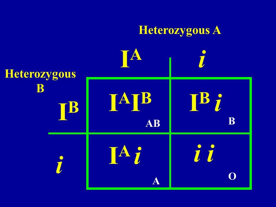 IAIA i IBIB i IAIBIAIB I A i I B i i Heterozygous A Heterozygous B AB B A O