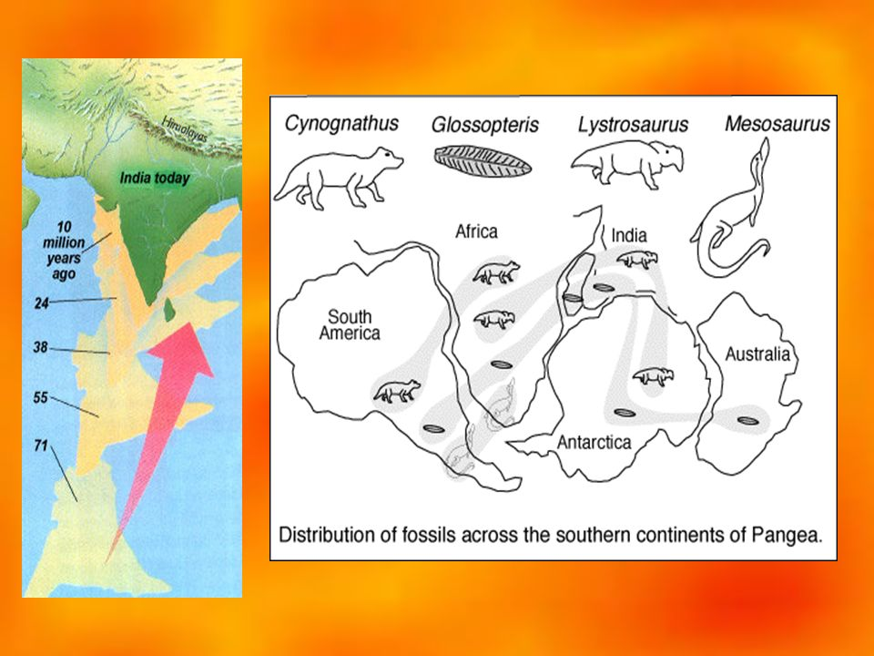 Who created the theory of continental drift .Give two forms of evidence to support this theory.