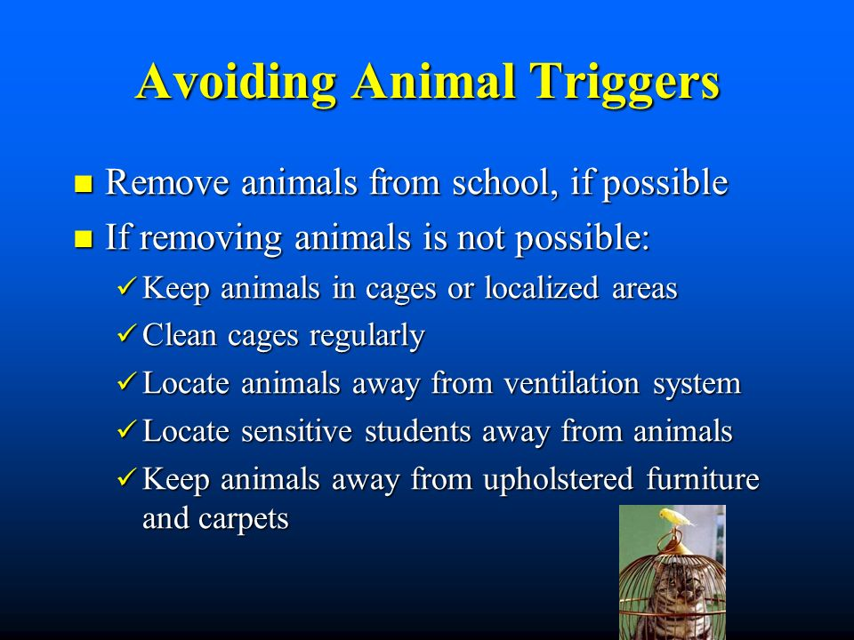 Avoiding Animal Triggers Remove animals from school, if possible Remove animals from school, if possible If removing animals is not possible: If removing animals is not possible: Keep animals in cages or localized areas Keep animals in cages or localized areas Clean cages regularly Clean cages regularly Locate animals away from ventilation system Locate animals away from ventilation system Locate sensitive students away from animals Locate sensitive students away from animals Keep animals away from upholstered furniture and carpets Keep animals away from upholstered furniture and carpets