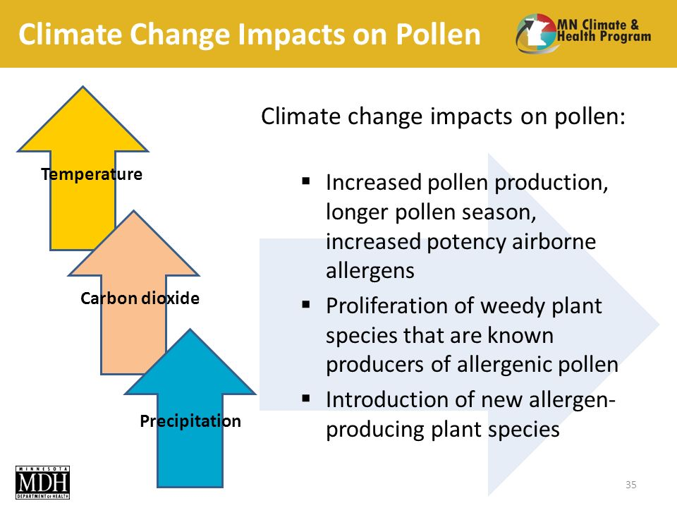 Climate Change Impacts on Pollen 35 Temperature Carbon dioxide Precipitation Climate change impacts on pollen: Increased pollen production, longer pollen season, increased potency airborne allergens Proliferation of weedy plant species that are known producers of allergenic pollen Introduction of new allergen- producing plant species