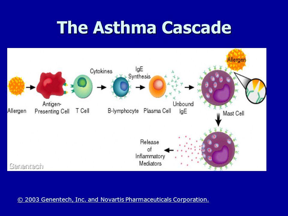 The Asthma Cascade © 2003 Genentech, Inc. and Novartis Pharmaceuticals Corporation.