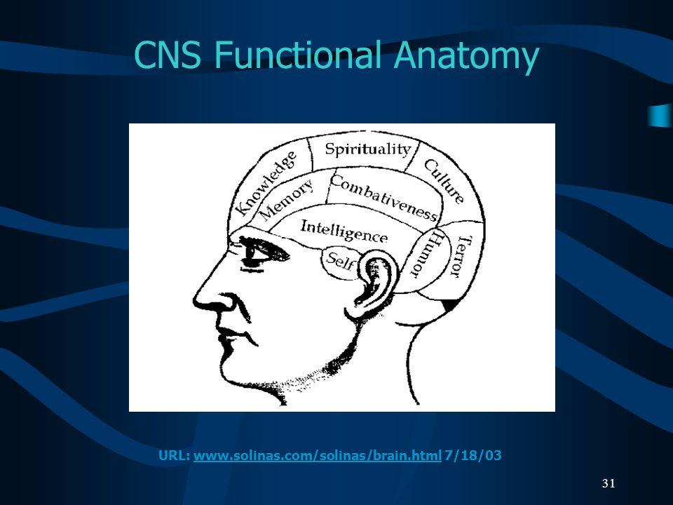 31 CNS Functional Anatomy URL: www.solinas.com/solinas/brain.html 7/18/03www.solinas.com/solinas/brain.html