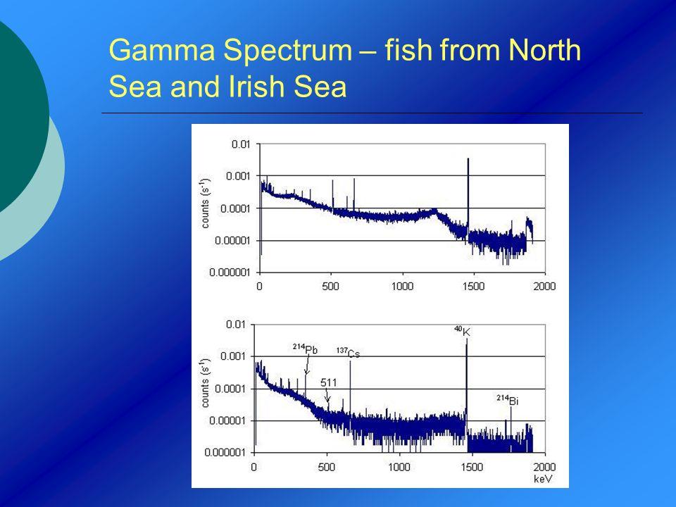 Gamma Spectrum – fish from North Sea and Irish Sea