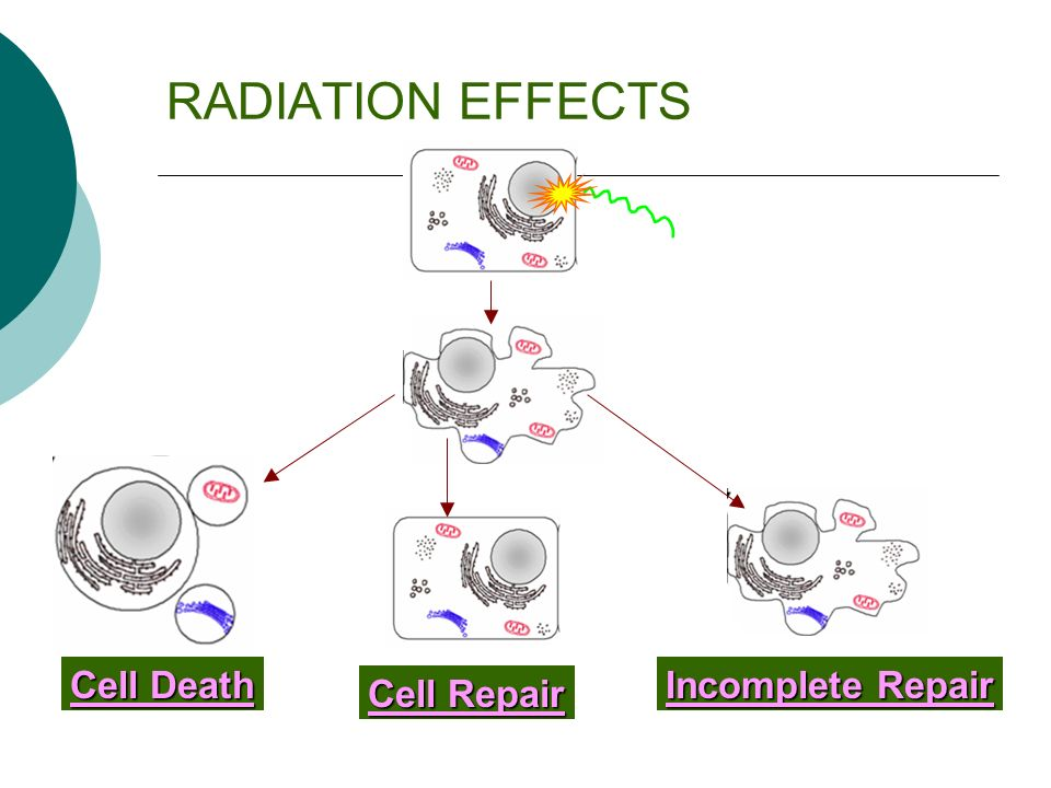 RADIATION EFFECTS Cell Death Cell Repair Incomplete Repair