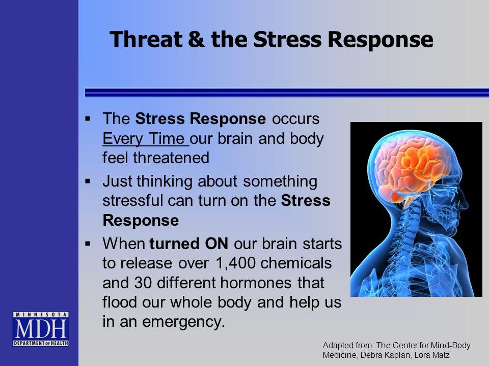 Threat & the Stress Response The Stress Response occurs Every Time our brain and body feel threatened Just thinking about something stressful can turn