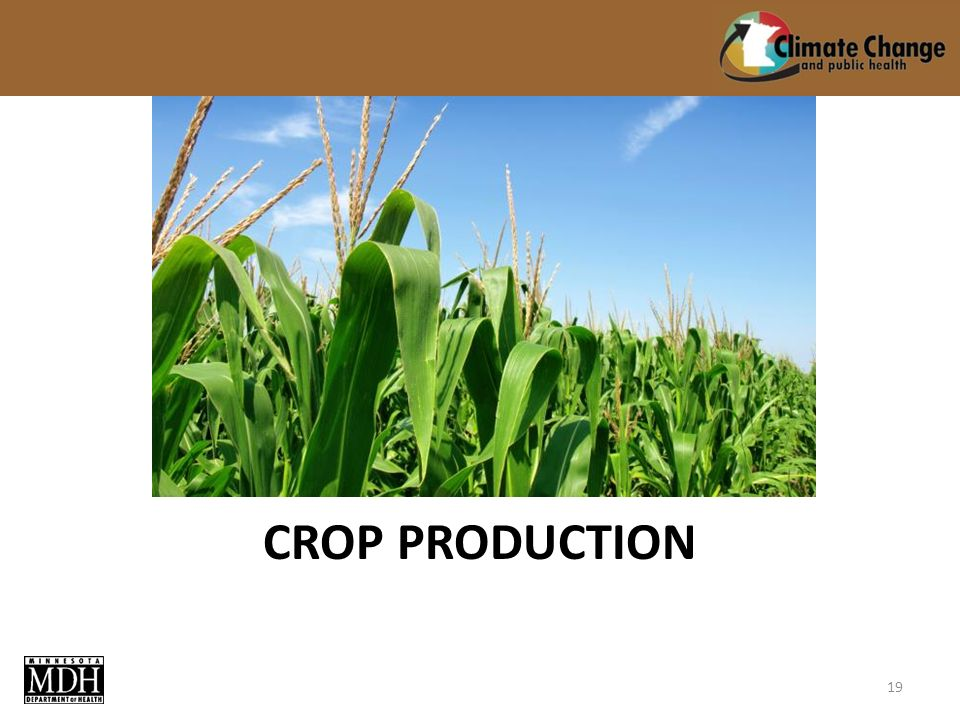 CROP PRODUCTION 19