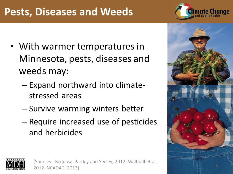 (Sources: Beddow, Pardey and Seeley, 2012; Walthall et al, 2012; NCADAC, 2013) With warmer temperatures in Minnesota, pests, diseases and weeds may: – Expand northward into climate- stressed areas – Survive warming winters better – Require increased use of pesticides and herbicides Pests, Diseases and Weeds 25