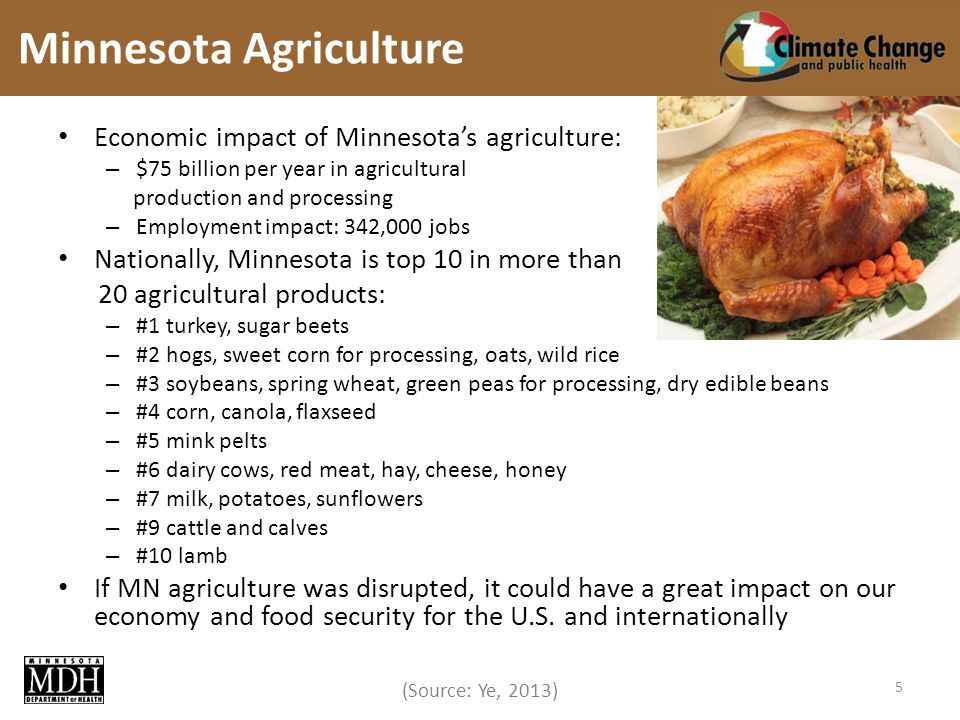 (Source: Ye, 2013) Economic impact of Minnesotas agriculture: – $75 billion per year in agricultural production and processing – Employment impact: 342,000 jobs Nationally, Minnesota is top 10 in more than 20 agricultural products: – #1 turkey, sugar beets – #2 hogs, sweet corn for processing, oats, wild rice – #3 soybeans, spring wheat, green peas for processing, dry edible beans – #4 corn, canola, flaxseed – #5 mink pelts – #6 dairy cows, red meat, hay, cheese, honey – #7 milk, potatoes, sunflowers – #9 cattle and calves – #10 lamb If MN agriculture was disrupted, it could have a great impact on our economy and food security for the U.S.