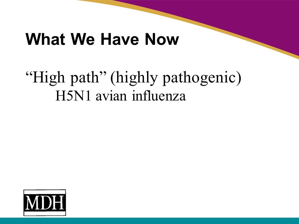 What We Have Now High path (highly pathogenic) H5N1 avian influenza