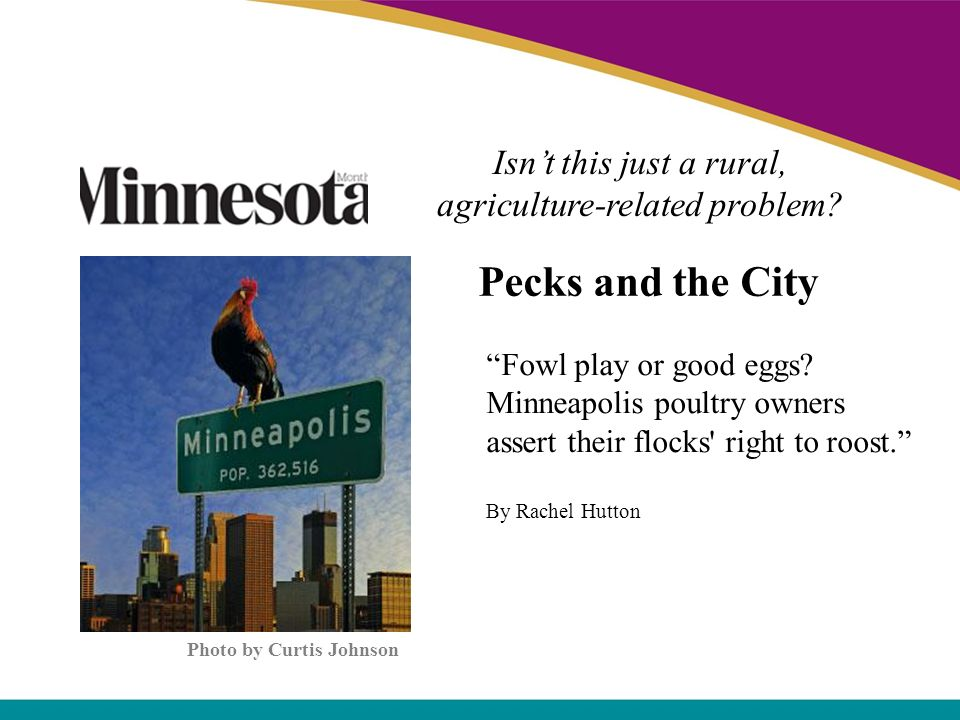 Pecks and the City Fowl play or good eggs? Minneapolis poultry owners assert their flocks' right to roost. By Rachel Hutton Photo by Curtis Johnson Is