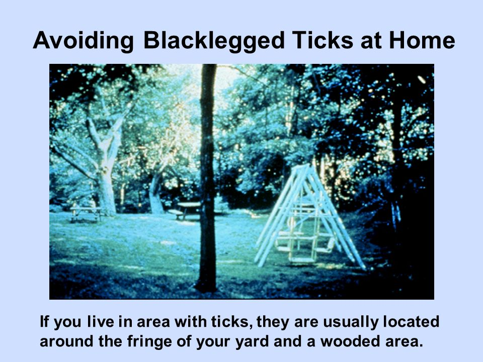 If you live in area with ticks, they are usually located around the fringe of your yard and a wooded area. Avoiding Blacklegged Ticks at Home