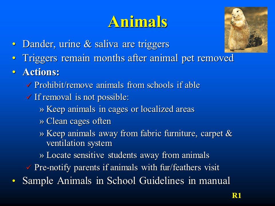 Animals Dander, urine & saliva are triggersDander, urine & saliva are triggers Triggers remain months after animal pet removedTriggers remain months a