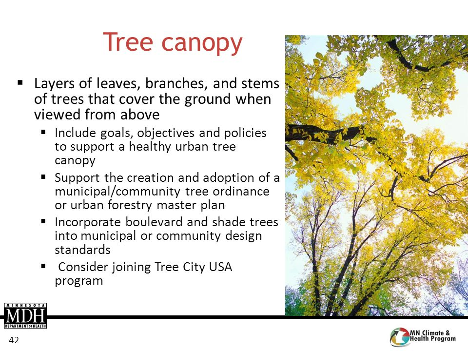 42 Tree canopy Layers of leaves, branches, and stems of trees that cover the ground when viewed from above Include goals, objectives and policies to s
