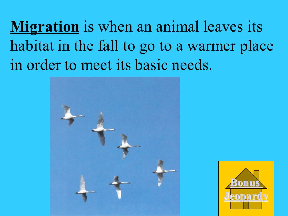 A Migration _________ is when an animal leaves its habitat in the fall to go to a warmer place in order to meet its basic needs. D Camouflage C Dorman