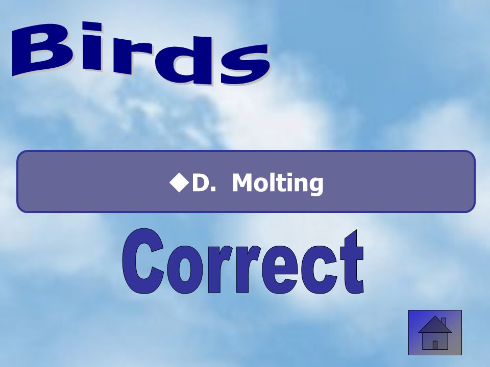What is another word for feathers? A. Plumage C. Molt B. Shoes D. Clothing 50:50