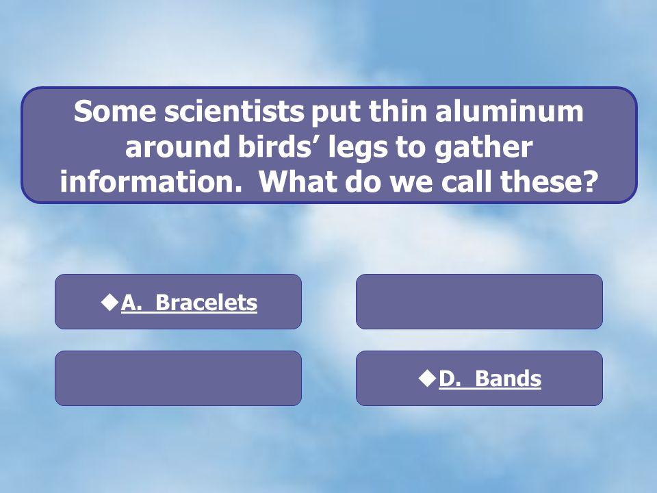 D. Bands